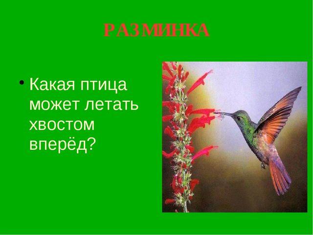 РАЗМИНКА Какая птица может летать хвостом вперёд?