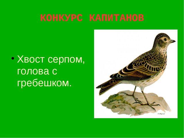 КОНКУРС КАПИТАНОВ Хвост серпом, голова с гребешком.