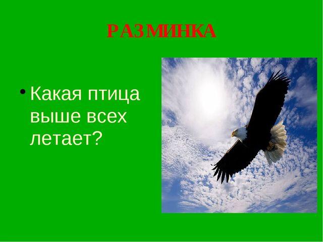 РАЗМИНКА Какая птица выше всех летает?