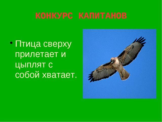 КОНКУРС КАПИТАНОВ Птица сверху прилетает и цыплят с собой хватает.