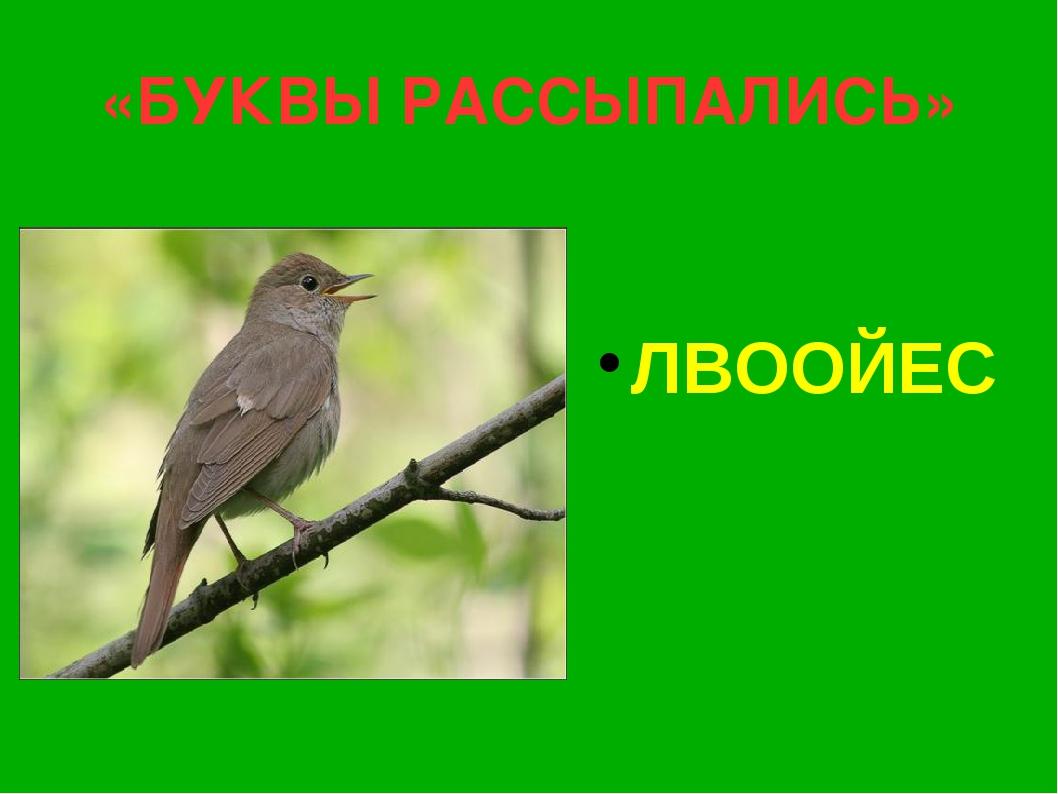 «БУКВЫ РАССЫПАЛИСЬ» ЛВООЙЕС