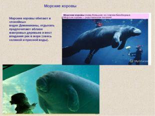 Морские коровы Морские коровы обитают в спокойных водахДоминиканы, отдыхать