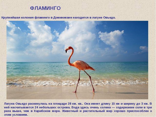 ФЛАМИНГО Крупнейшая колония фламинго в Доминикане находится в лагуне Овьедо....