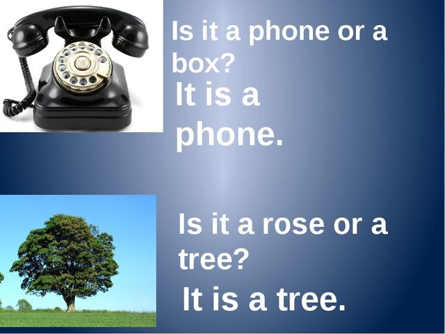Is it a phone or a box? It is a phone. Is it a rose or a tree? It is a tree.