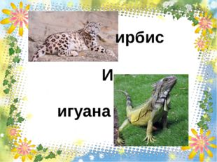 ирбис игуана И