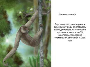 Палеопропите́к Вид лемуров, относящихся к вымершему роду, обитавшему на Мадаг