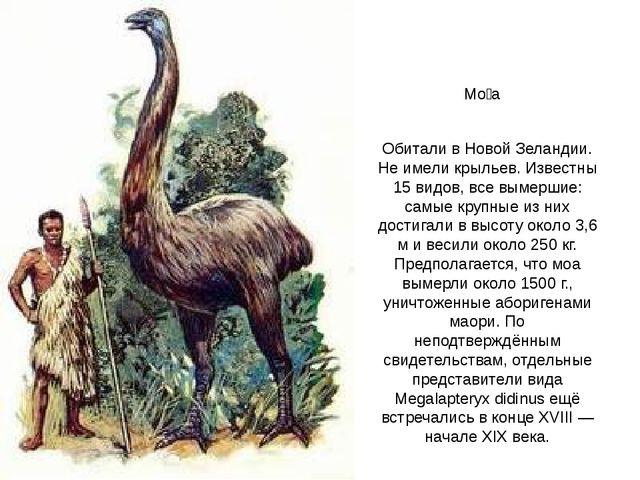 Мо́а Обитали в Новой Зеландии. Не имели крыльев. Известны 15 видов, все вымер...