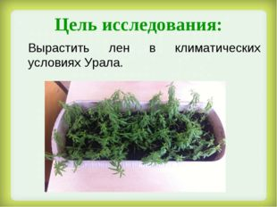 Цель исследования: Вырастить лен в климатических условиях Урала.