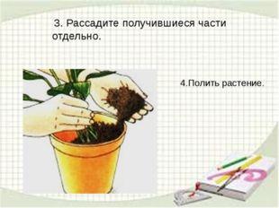 3. Рассадите получившиеся части отдельно. 4.Полить растение.