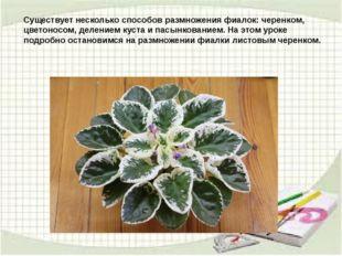 Существует несколько способов размножения фиалок: черенком, цветоносом, делен