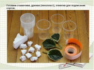 Готовим стаканчики, дренаж (пенопласт), этикетки для подписания сортов.