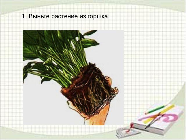 1. Выньте растение из горшка.