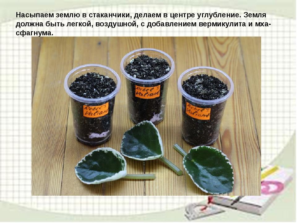 узамбарская фиалка или сенполия Img10