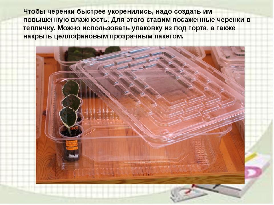 узамбарская фиалка или сенполия Img13
