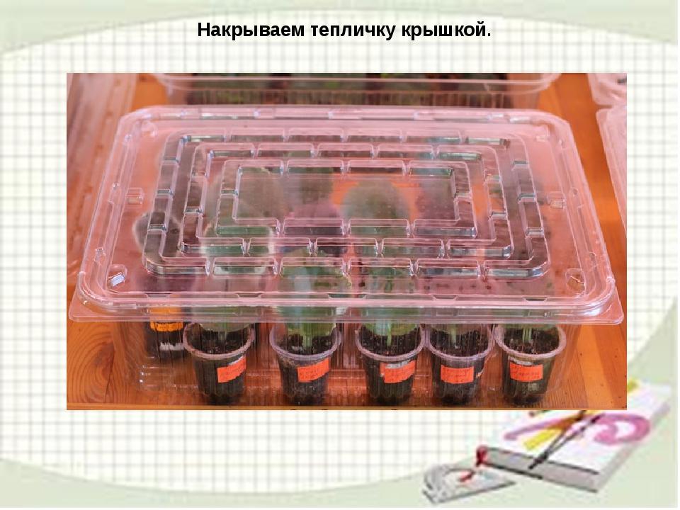 узамбарская фиалка или сенполия Img15