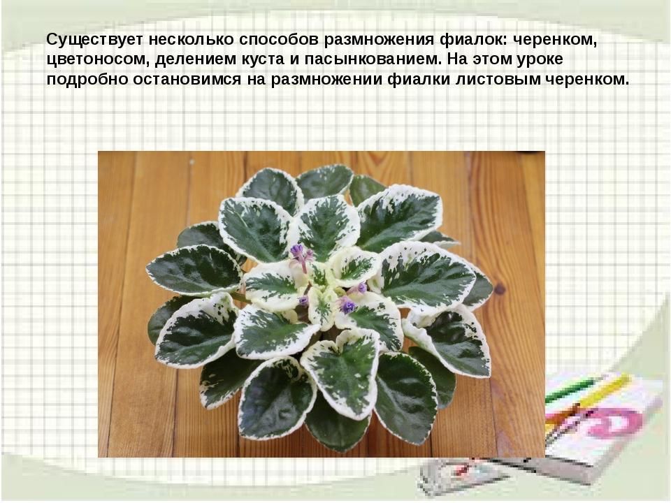 Существует несколько способов размножения фиалок: черенком, цветоносом, делен...
