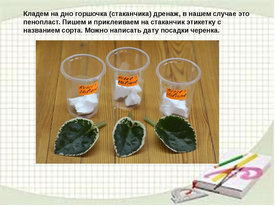 узамбарская фиалка или сенполия Img9