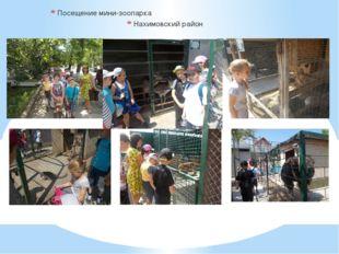 Посещение мини-зоопарка Нахимовский район