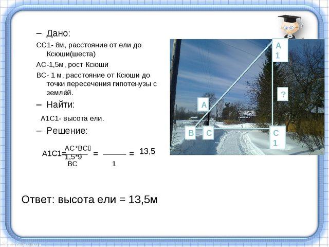 Дано: СС1- 8м, расстояние от ели до Ксюши(шеста) АС-1,5м, рост Ксюши ВС- 1 м,...