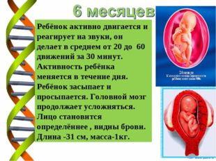 Ребёнок активно двигается и реагирует на звуки, он делает в среднем от 20 до