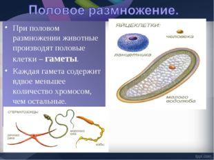 При половом размножении животные производят половые клетки – гаметы. Каждая г