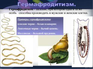 Примеры гермафродитизма: плоские черви – белая планария; Ленточные черви – бы