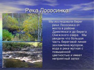Река Лососинка Мы исследовали берег реки Лососинка от моста в районе Древлянк