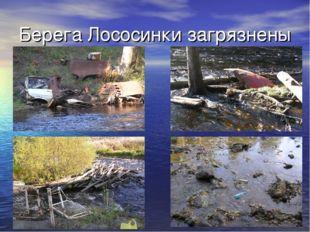 Берега Лососинки загрязнены