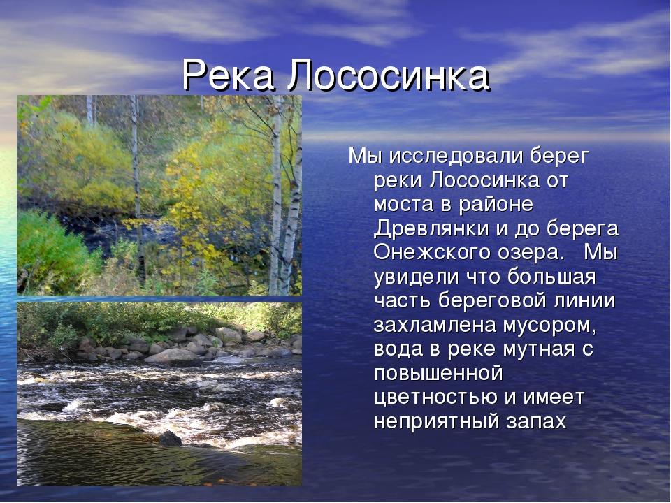 Река Лососинка Мы исследовали берег реки Лососинка от моста в районе Древлянк...