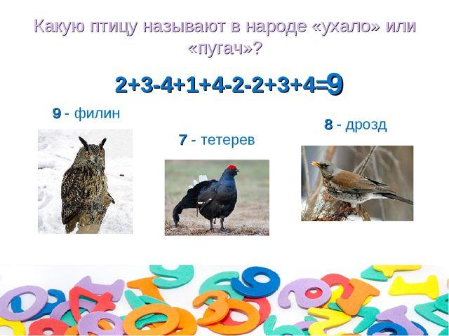 Какую птицу называют в народе «ухало» или «пугач»? 2+3-4+1+4-2-2+3+4= 8 - дро...