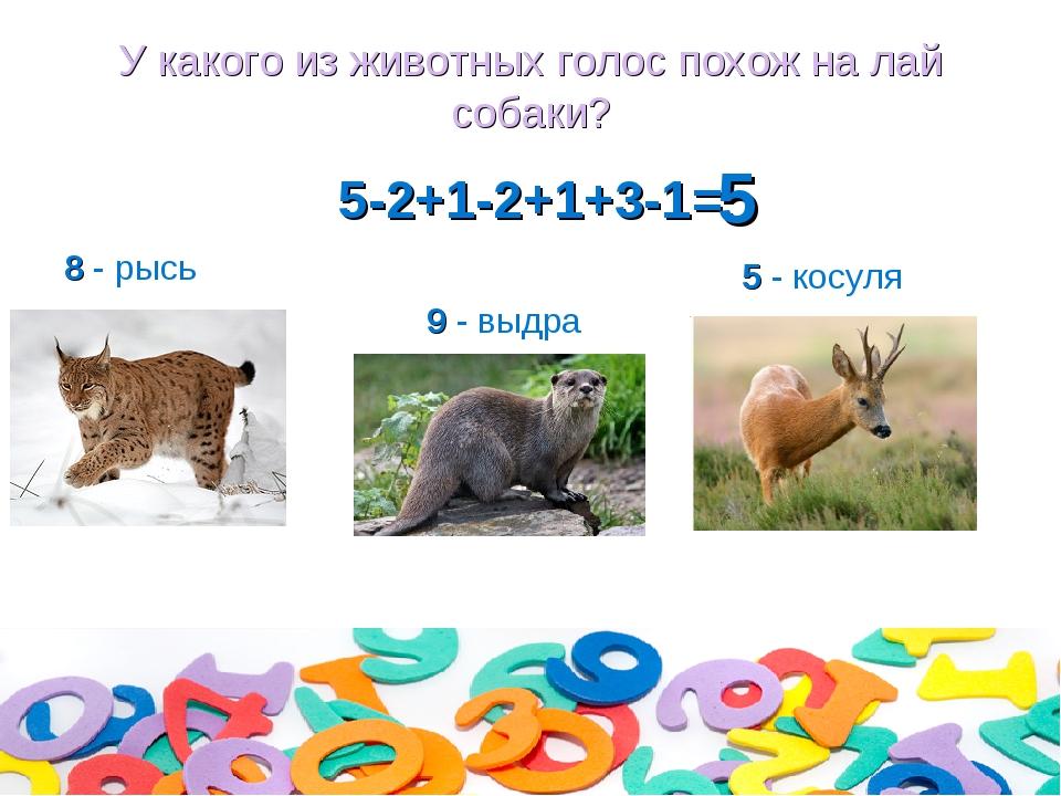 У какого из животных голос похож на лай собаки? 5-2+1-2+1+3-1= 8 - рысь 9 - в...