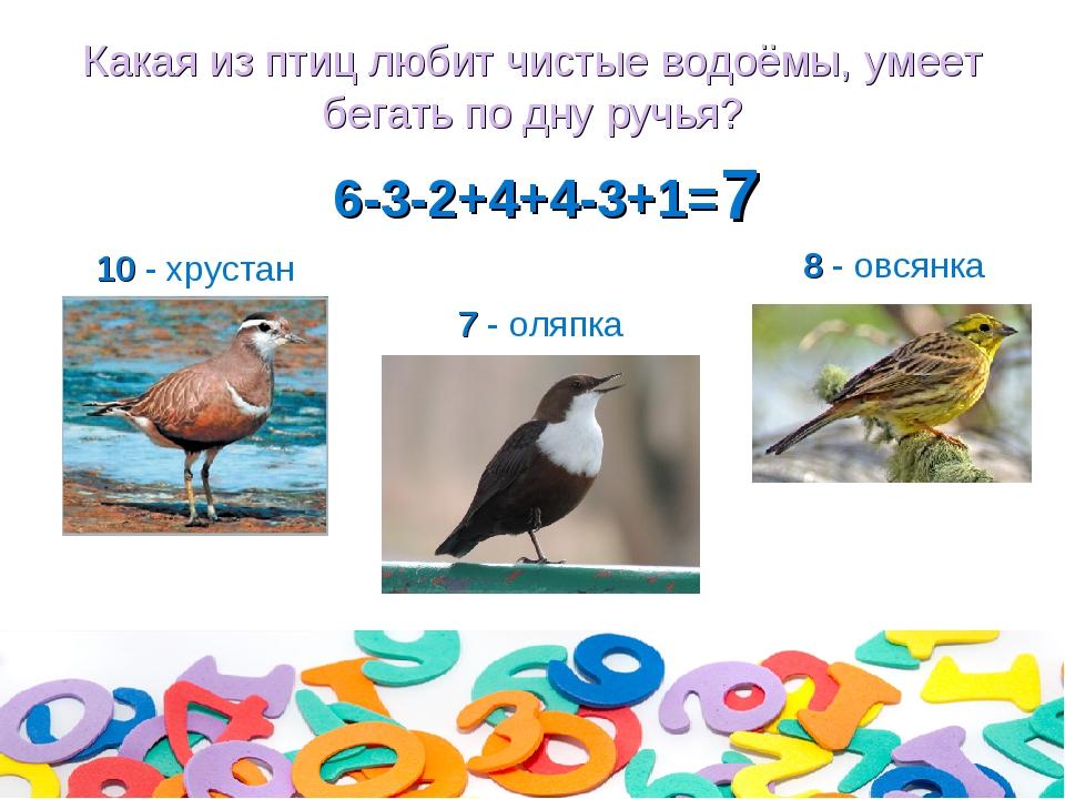 Какая из птиц любит чистые водоёмы, умеет бегать по дну ручья? 6-3-2+4+4-3+1=...