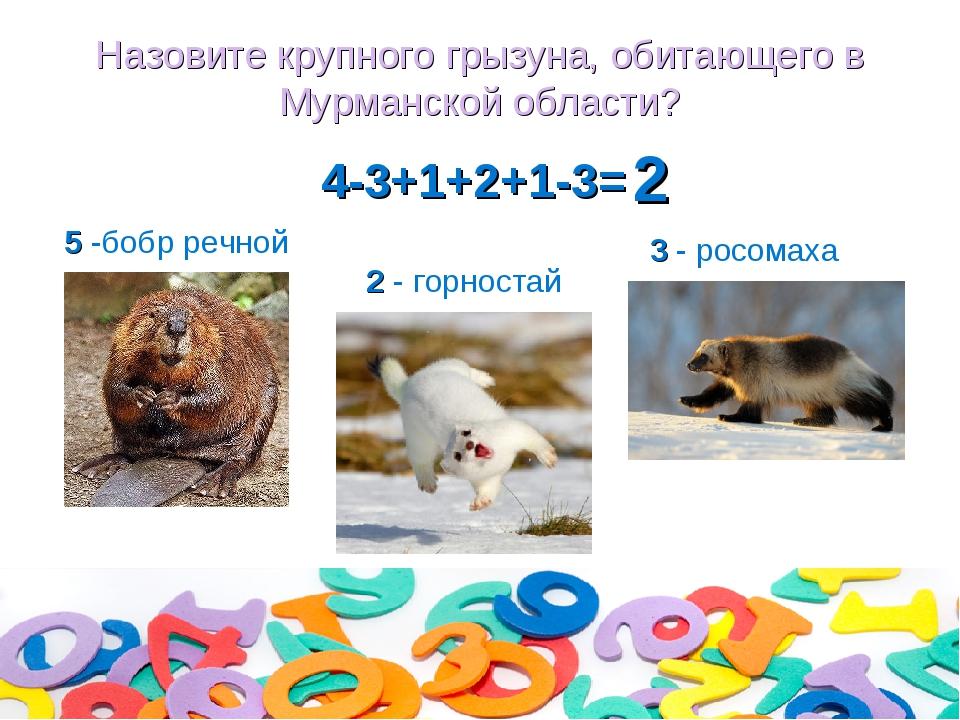 Назовите крупного грызуна, обитающего в Мурманской области? 4-3+1+2+1-3= 2 -...