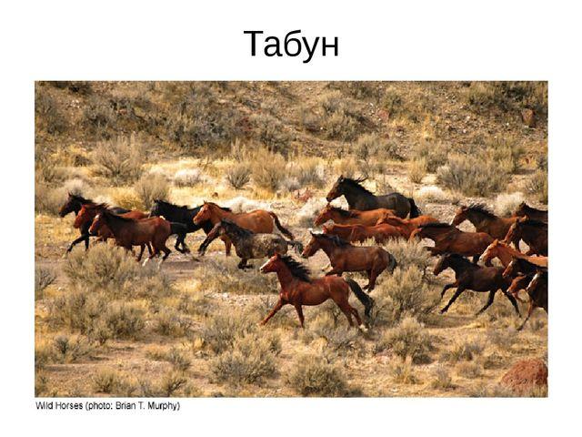 Табун