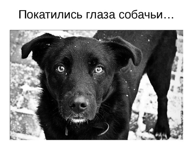 Покатились глаза собачьи…