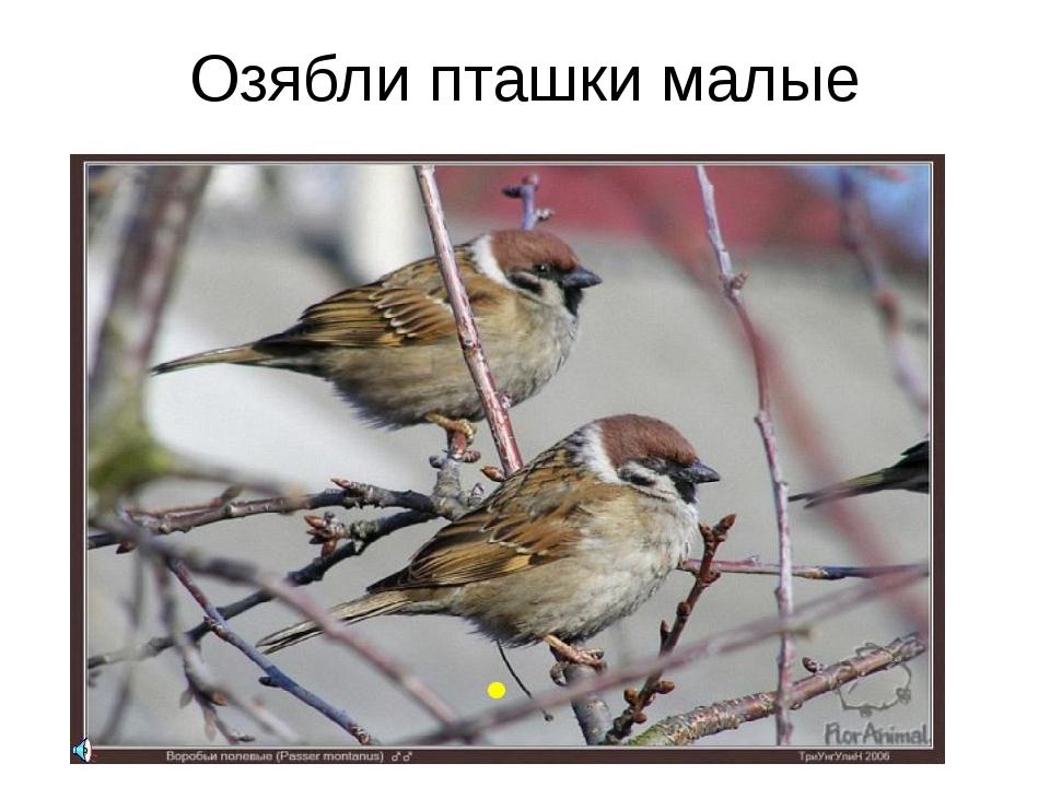 Озябли пташки малые