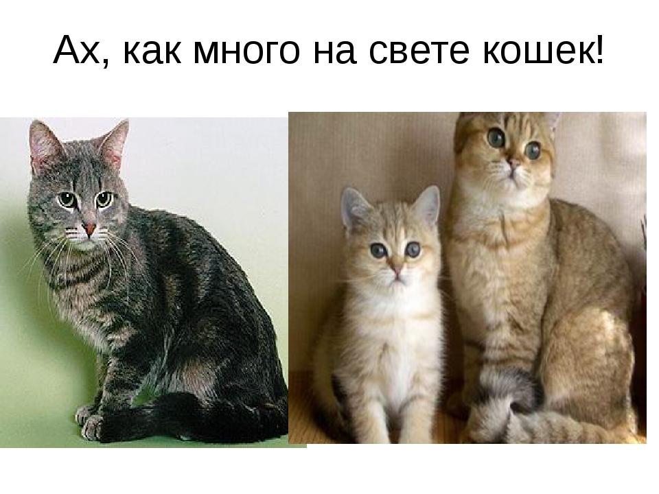 Ах, как много на свете кошек!