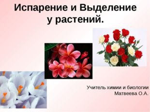 Испарение и Выделение у растений. Учитель химии и биологии Матвеева О.А.