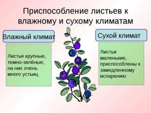 Приспособление листьев к влажному и сухому климатам Влажный климат Листья кру