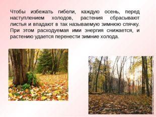 Чтобы избежать гибели, каждую осень, перед наступлением холодов, растения сбр