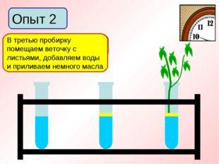 Опыт 2 В первую пробирку добавим немного воды Во вторую пробирку добавим воды