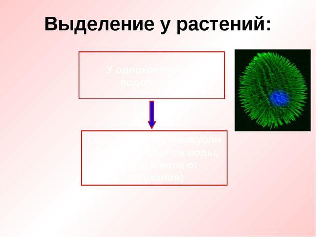 Выделение у растений: У одноклеточных водорослей Сократительные вакуоли (удал...