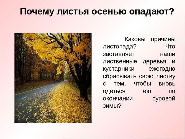 Почему листья осенью опадают? Каковы причины листопада? Что заставляет наши л...