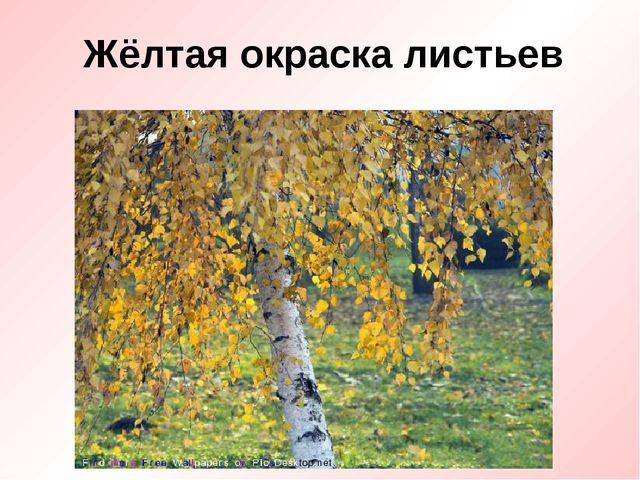 Жёлтая окраска листьев