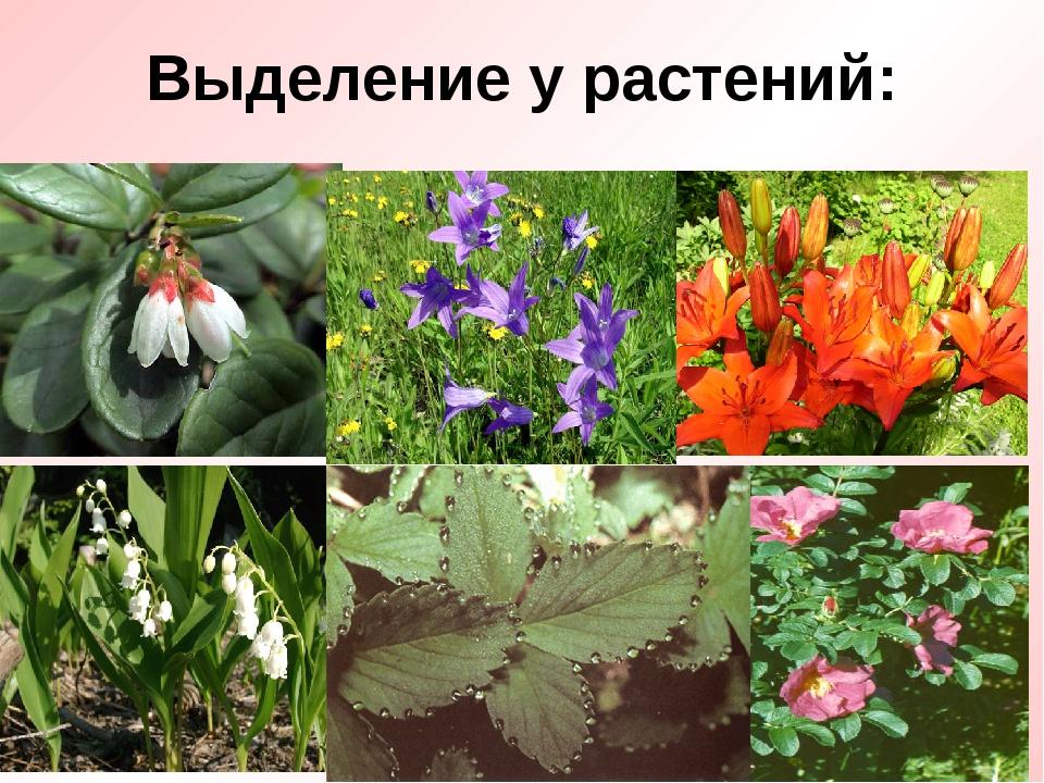 Выделение у растений: