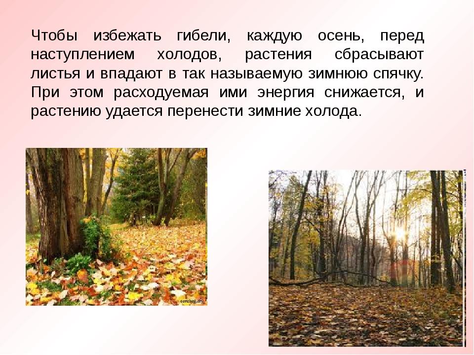 Чтобы избежать гибели, каждую осень, перед наступлением холодов, растения сбр...