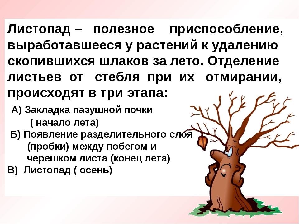 Листопад – полезное приспособление, выработавшееся у растений к удалению скоп...