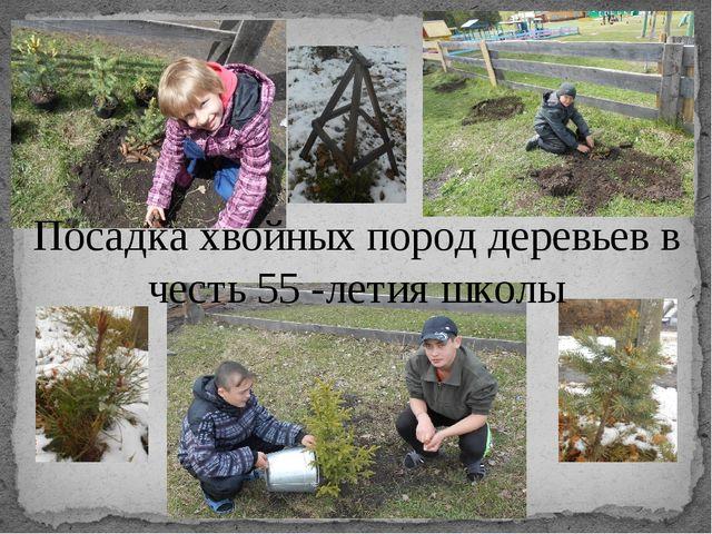 Посадка хвойных пород деревьев в честь 55 -летия школы
