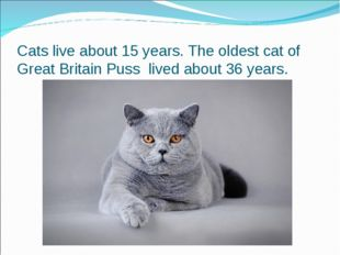Cats live about 15 years. The oldest cat of Great Britain Puss lived about 36