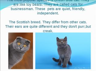 The most popular species is British blue cat. They are like toy bears. They a